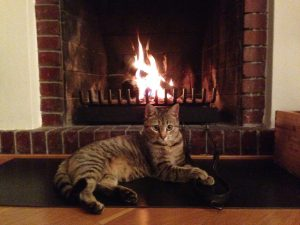 cat-fireplace-hearth