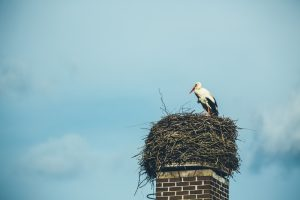 nest-on-top-of-chimney